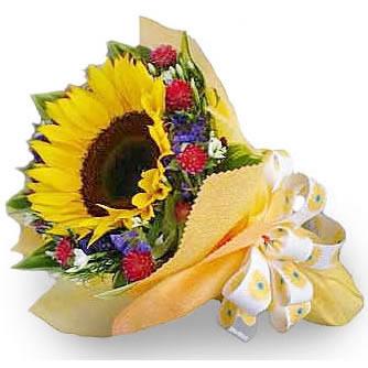 石夏兰儿童鲜花图片展示