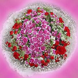 石夏兰【母�畚尴蕖�100朵�p色康乃馨花束鲜花图片展示