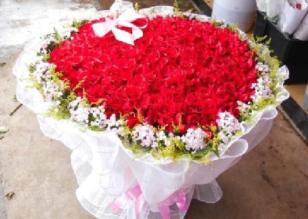 石夏兰999朵红玫瑰鲜花图片展示。