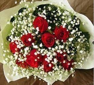 石夏兰【永远的爱】11枝红玫瑰鲜花图片展示