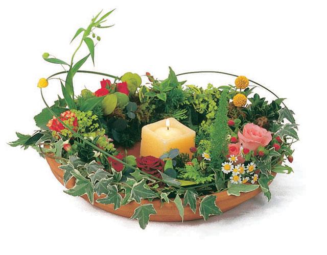 石夏兰生日蜡烛花鲜花图片展示。