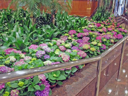石夏兰花坛鲜花图片展示