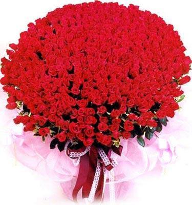 石夏兰999朵玫瑰鲜花图片展示。