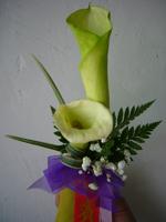 石夏兰鲜花图片展示,