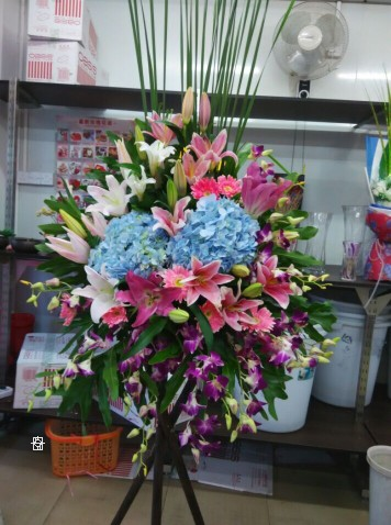 石夏兰港式开业花篮,华强北店,绣球鲜花图片展示。