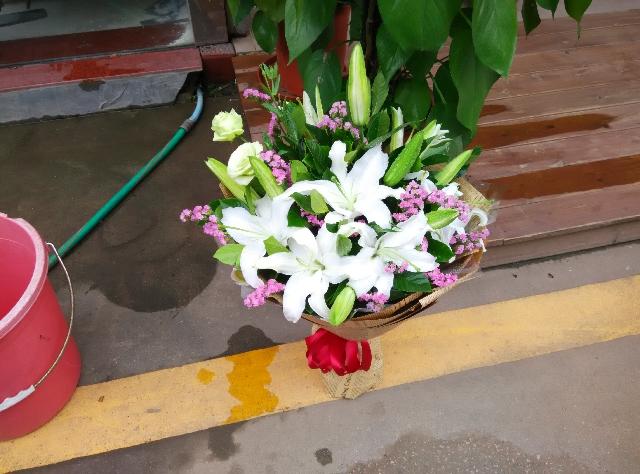 石夏兰生日16朵白百合,勿忘我,花束,198元,花材,16朵白百合,勿忘我,等,包装,扇型包装鲜花图片展示