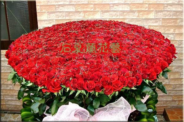 石夏兰1000朵玫瑰送情人鲜花图片展示