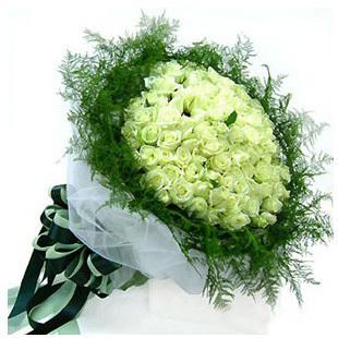 石夏兰99朵白玫瑰鲜花图片展示。