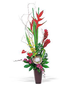 石夏兰脱俗,大鸟,高级艺术花篮,送礼,接待台鲜花,VIP客房鲜花,花材,跳舞兰,红掌,火焰,高级艺术插花篮鲜花图片展示。