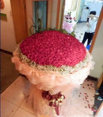 石夏兰520朵红玫鲜花图片展示