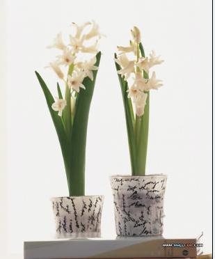 石夏兰艺术瓶花鲜花图片展示。
