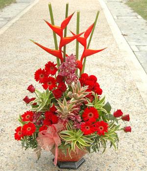 石夏兰【金玉满堂】春节送礼高档花篮鲜花图片展示。