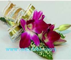 石夏兰秦国兰胸花鲜花图片展示。