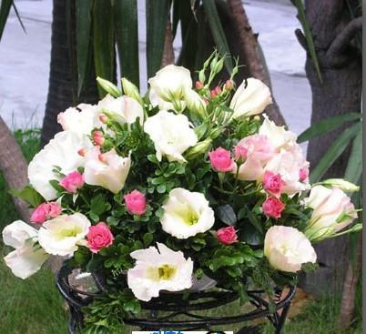 石夏兰会议鲜花,桌花,宴会鲜花,办公室装点鲜花鲜花图片展示。