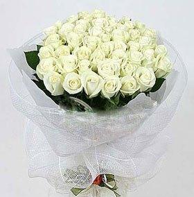 石夏兰66朵白色玫瑰鲜花图片展示。
