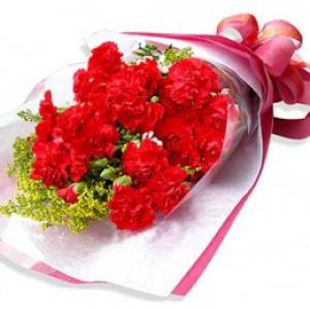 石夏兰16枝香石竹鲜花图片展示