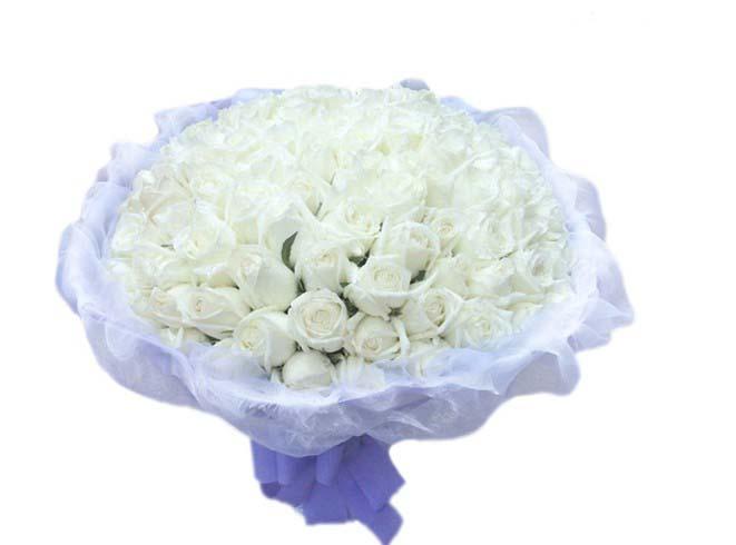 石夏兰99朵白玫瑰,高端时尚,深圳,鲜花速递,生日玫瑰花束,预订,福田,南山,鲜花店鲜花图片展示。