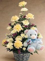 石夏兰康乃馨与公仔花篮鲜花图片展示。