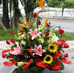 石夏兰手提式送礼花篮,手提花篮,商务花篮,礼品花篮鲜花图片展示。