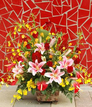 石夏兰【万象更新】新年鲜花鲜花图片展示。