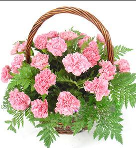 石夏兰康乃馨艺术花篮鲜花图片展示。