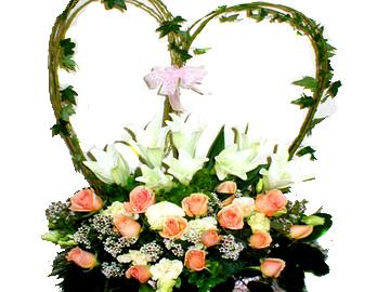 石夏兰儿童鲜花图片展示。