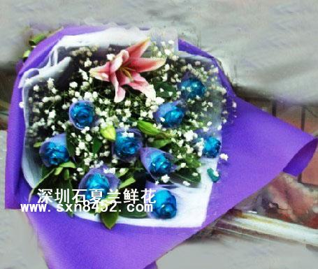 石夏兰9朵蓝玫瑰鲜花图片展示。