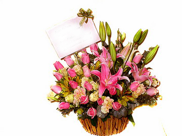 石夏兰儿童鲜花鲜花图片展示。
