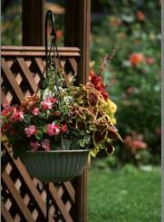 石夏兰绿饰鲜花图片展示